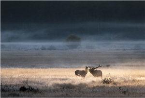 trophy elk hunting properties for sale
