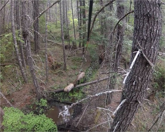 elk hunting property for sale new mexico