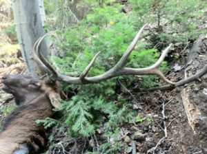 prime elk hunting land for sale