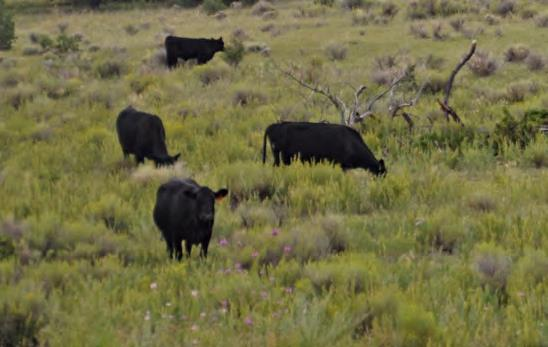 cattle ranches for sale new mexico