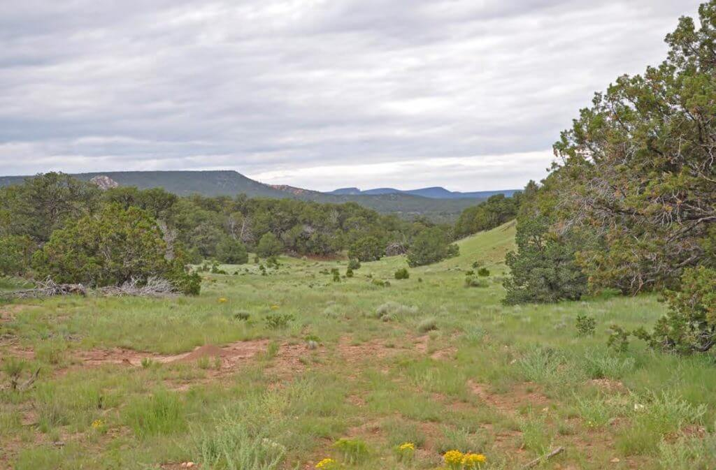 New Mexico hunting land for sale