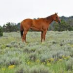 equine friendly ranches for sale New Mexico