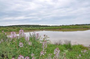 ranch with pond for sale