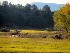 elk hunting ranches for sale New Mexico