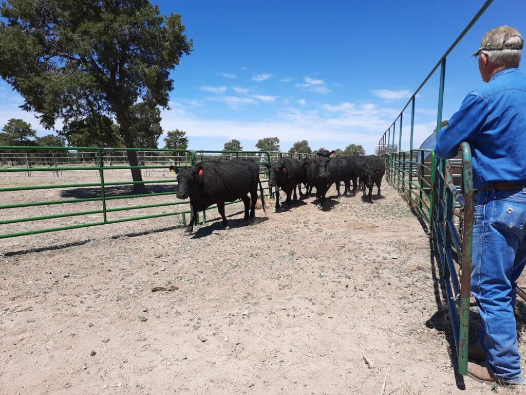 avery ranch for sale